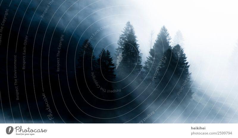 Im dunklen Wald ... Natur Landschaft Herbst Nebel Baum Park Berge u. Gebirge außergewöhnlich bedrohlich dunkel fantastisch gruselig kalt natürlich schön schwarz