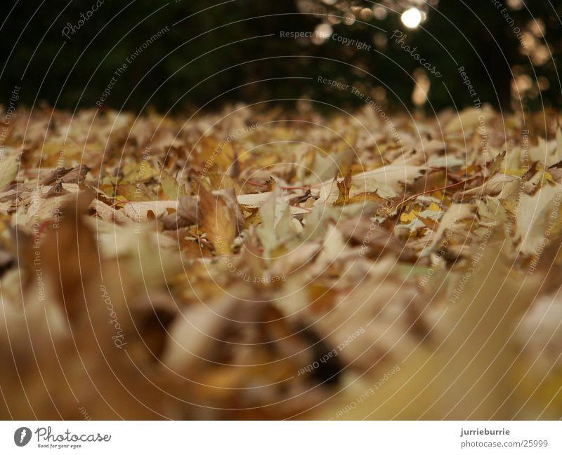Herfst gevoel 01 Herbst Mischung greifen Bündel Prospekt