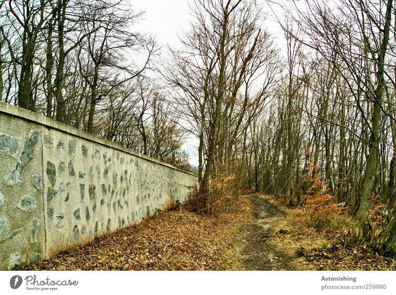 entlang der Mauer 2 Umwelt Natur Landschaft Pflanze Erde Himmel Herbst Winter Wetter Baum Gras Sträucher Wald Wand Wege & Pfade Stein Holz braun grau weiß Ast