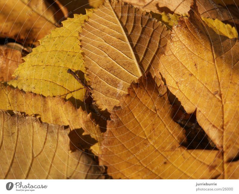 Blaterdek Herbst greifen Bündel Baum Prospekt bladerdek