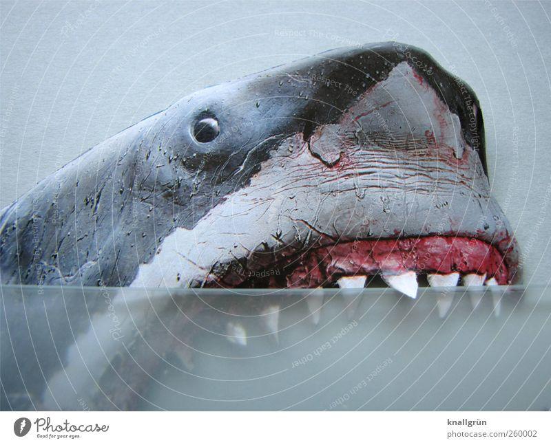 Vorsicht! Bissig! weiß Tier Gefühle grau rosa Angst gefährlich bedrohlich Gebiss Todesangst Blut Aggression Haifisch Entsetzen Meerestier gefräßig