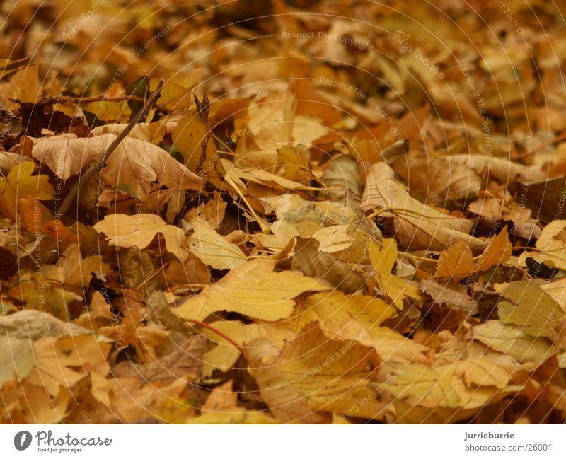 Herfst gevoel 02 Herbst Mischung greifen Bündel Prospekt