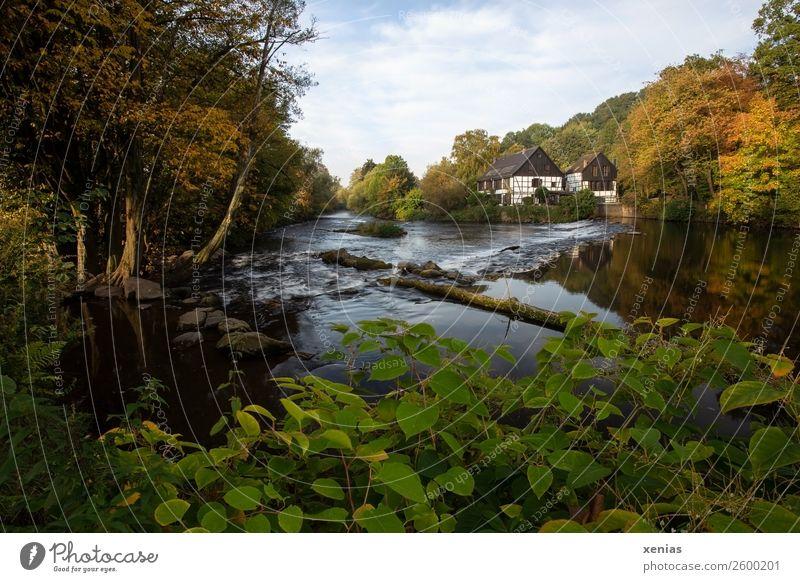 Wupper mit Wipperkotten im Herbst Kotten Schleifkotten Ferien & Urlaub & Reisen Tourismus Bergisches Land Schönes Wetter Baum Flussufer Bach Solingen