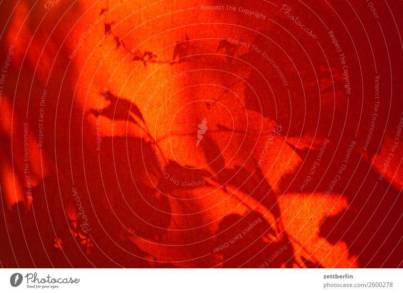 Schatten am Fenster Ast Baum Blatt Garten Menschenleer Natur Pflanze Baumstamm Sträucher Textfreiraum Tiefenschärfe Zweig Licht Hintergrundbild