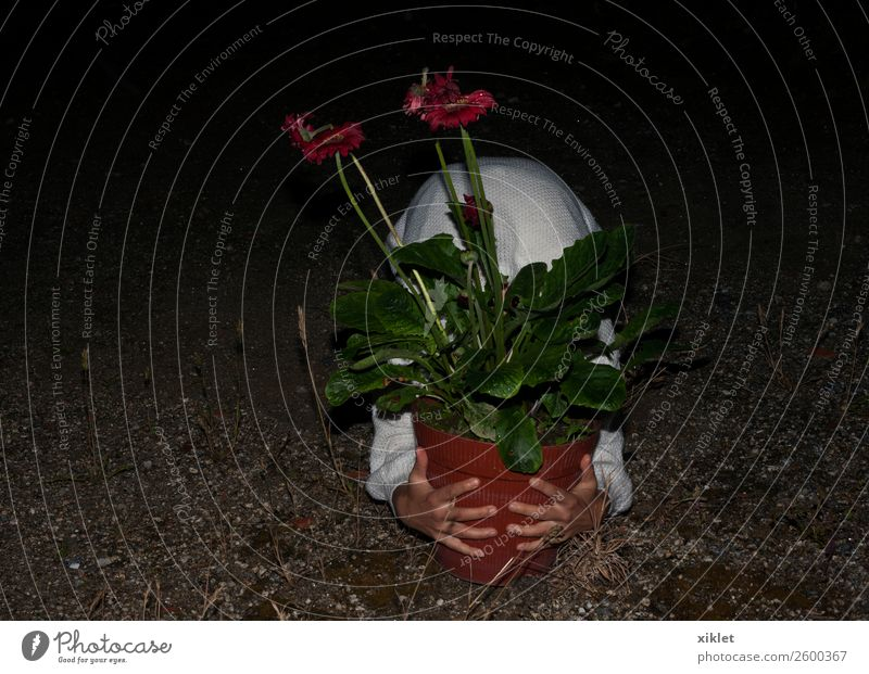Frau Mensch Pflanze grün weiß rot Hand Blume Blatt schwarz Erwachsene natürlich Garten Körper nass Neugier