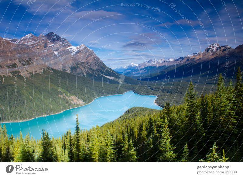 Himmel Natur blau grün schön Baum Ferien & Urlaub & Reisen Sommer Ferne Wald Umwelt Landschaft Berge u. Gebirge See Park Wetter