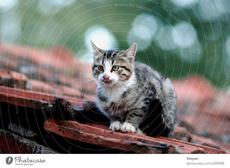 Katze weiß grün schön rot Tier schwarz grau Wärme braun rosa elegant Erfolg Coolness niedlich Haustier