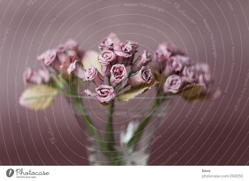 La Vie En Rose Pflanze Blume Blumenstrauß Papierrosen Glas Blühend verblüht dehydrieren alt einfach natürlich schön trist trocken braun grün rosa Sympathie