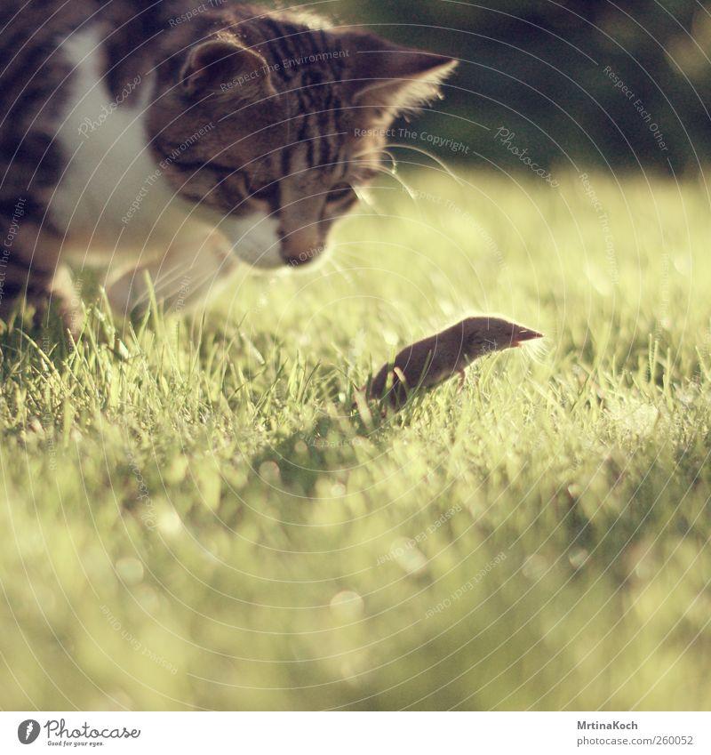 UAAAAAAAAH! Tier Haustier Wildtier Totes Tier Katze Maus 2 Jagd mausetot Farbfoto mehrfarbig Außenaufnahme Menschenleer Tag Licht Schatten Kontrast Gegenlicht