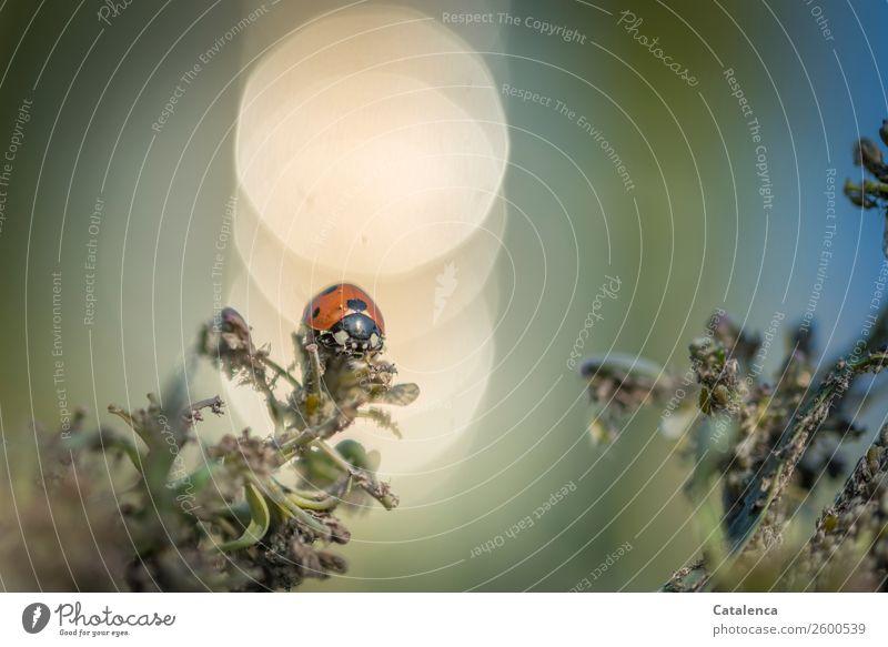 Im Schlaraffenland II Natur Sommer blau schön grün Tier Leben Umwelt natürlich Garten orange Stimmung gold Tiergruppe Gemüse Fressen
