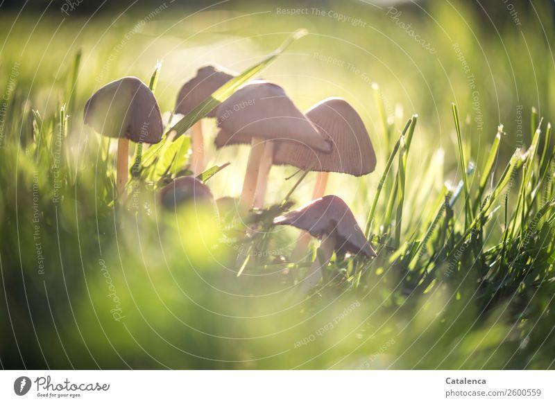 Gemeinschaft Natur Pflanze Herbst Schönes Wetter Gras Blatt Pilz Garten Wiese stehen dehydrieren Wachstum frisch schön braun gelb gold grün Einigkeit Netzwerk