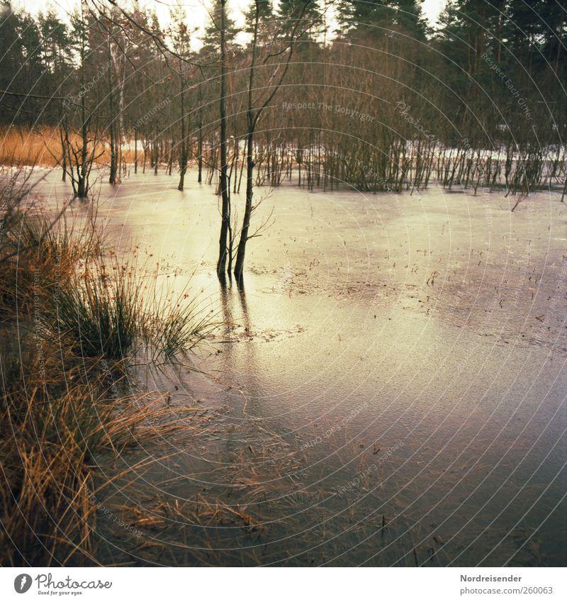 Eisig Natur Wasser Baum Pflanze Winter Wald Landschaft Gras Stimmung Klima Frost Jahreszeiten Schilfrohr frieren Teich