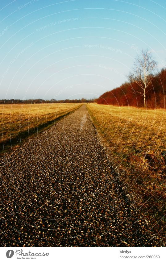 oneway Landschaft Wolkenloser Himmel Winter Schönes Wetter leuchten Freundlichkeit schön Wege & Pfade Ziel Birke lang geradeaus Natur Farbfoto mehrfarbig