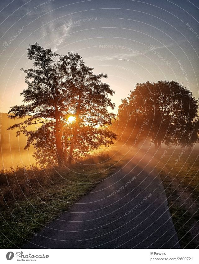 morgens an der elbe Natur Schönes Wetter Wiese Fluss schön Nebelschleier Nebelstimmung Fahrradweg Herbst Morgennebel Tau Arbeitsweg Farbfoto Außenaufnahme