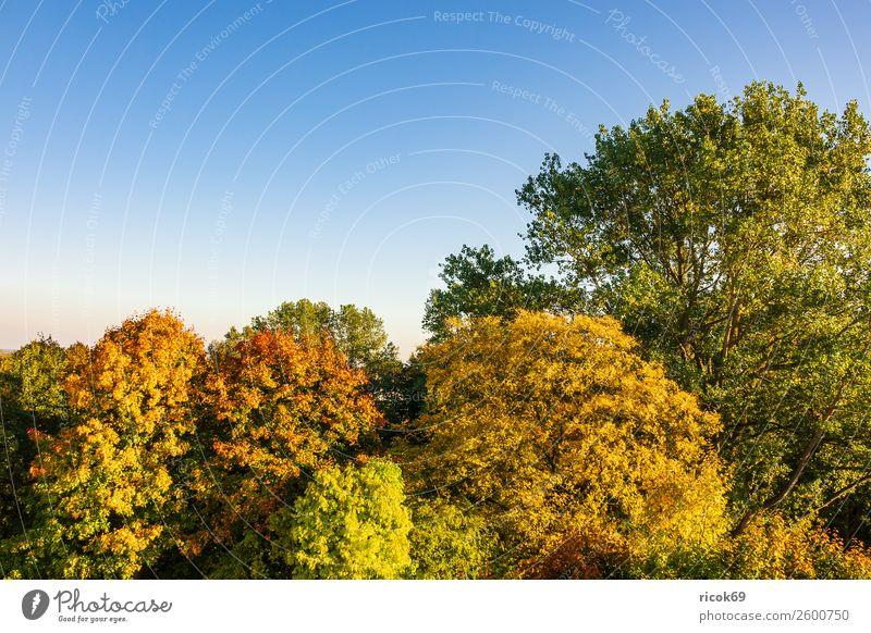 Herbstlich gefärbte Bäume mit blauen Himmel Erholung Ferien & Urlaub & Reisen Tourismus Natur Landschaft Wolkenloser Himmel Wetter Baum Farbe Idylle Klima
