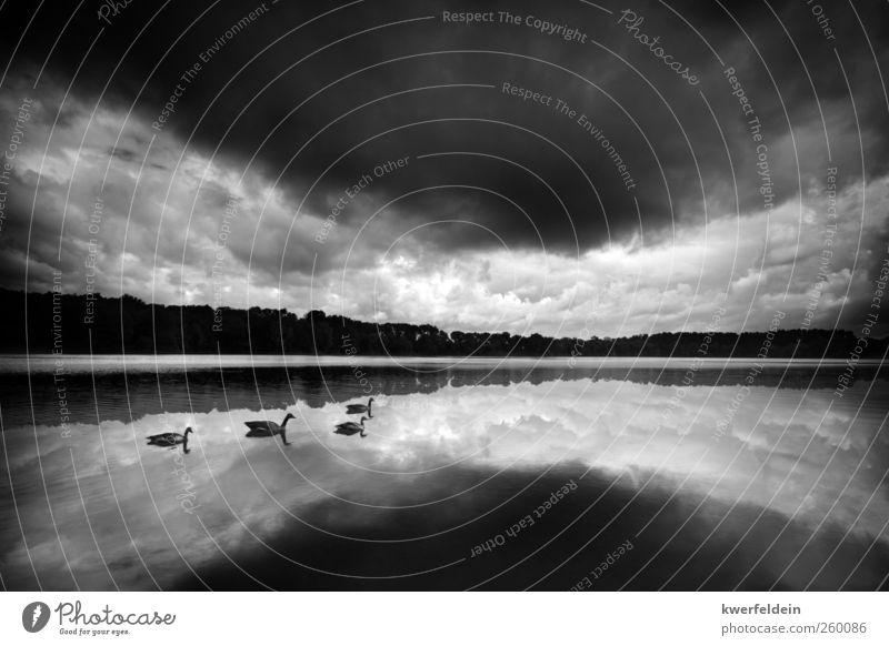 Der Schwanensee Natur Wasser Sommer Wolken Einsamkeit Tod Herbst Landschaft Traurigkeit See träumen Stimmung Schwimmen & Baden ästhetisch Trauer Sehnsucht