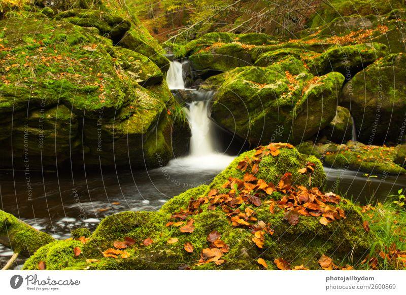 Wasserfall im Wald Umwelt Natur Landschaft Pflanze Tier Erde Frühling Sommer Moos Blatt Grünpflanze Bach Fluss Stein Sand Holz Freundlichkeit frisch Gefühle