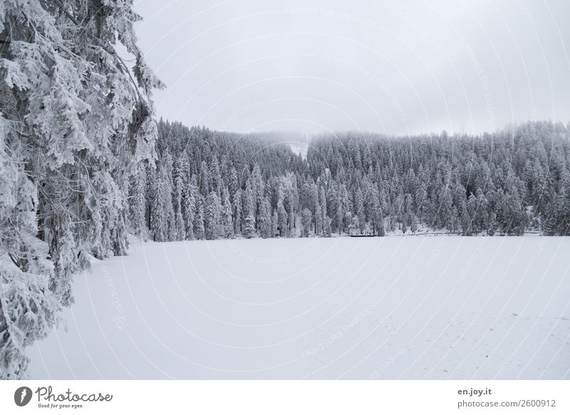 kaaaalt Ferien & Urlaub & Reisen Tourismus Ausflug Winter Schnee Winterurlaub Natur Landschaft Klima Klimawandel Eis Frost Wald Hügel Berge u. Gebirge