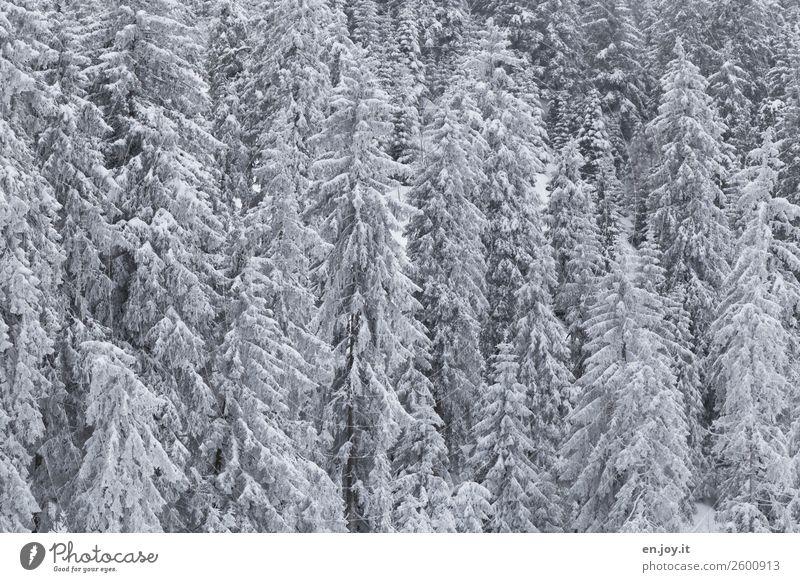 Frohe Weihnachten Ihr Lieben Ferien & Urlaub & Reisen Ausflug Winter Schnee Umwelt Natur Landschaft Pflanze Klima Klimawandel Eis Frost Wald Nadelwald