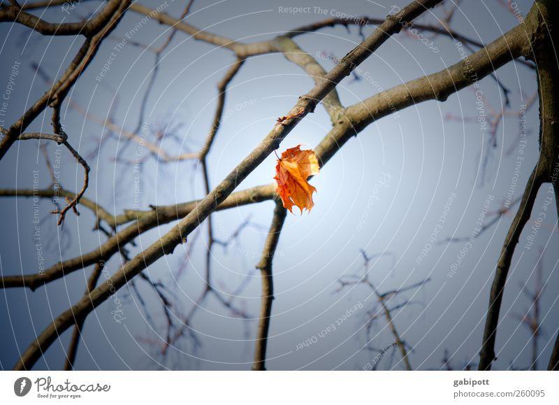 hängengeblieben Natur Himmel Herbst Pflanze Blatt blau gelb einzeln Einsamkeit hängend Aufenthalt Ast Traurigkeit Farbfoto Gedeckte Farben Detailaufnahme Tag