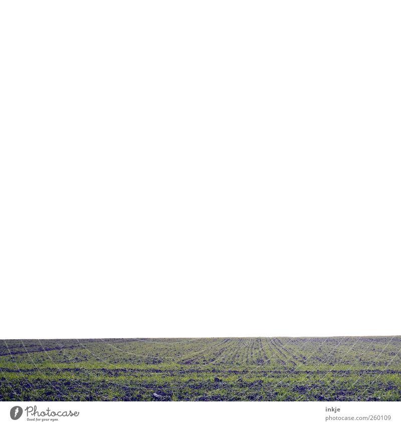 Das wolfenbüttler Umland ist voller Textfreiräume! Natur grün Winter Ferne Herbst Umwelt kalt Landschaft Gefühle Gras Wege & Pfade Luft Stimmung hell Horizont