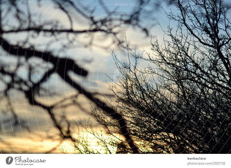 Wuthering Heights Himmel Natur Baum Pflanze Wolken Ferne Herbst Umwelt Luft Stimmung Kraft natürlich wild Klima Sträucher Urelemente