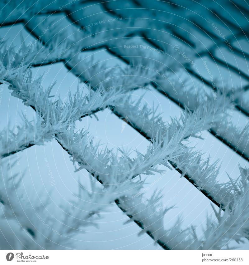 Stacheldraht Natur blau weiß Winter schwarz kalt Eis Ordnung Frost Spitze Schutz chaotisch eckig Eiskristall Maschendrahtzaun
