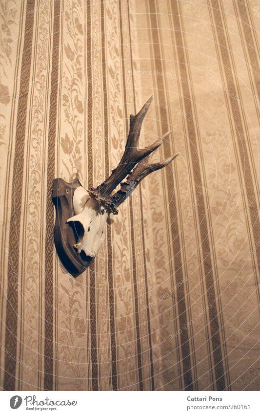 Vintage Tier Tod Wildtier einfach Kitsch Jagd Tapete Horn hängen Hirsche Siebziger Jahre altehrwürdig Reh Skelett Tierschädel Tapetenmuster