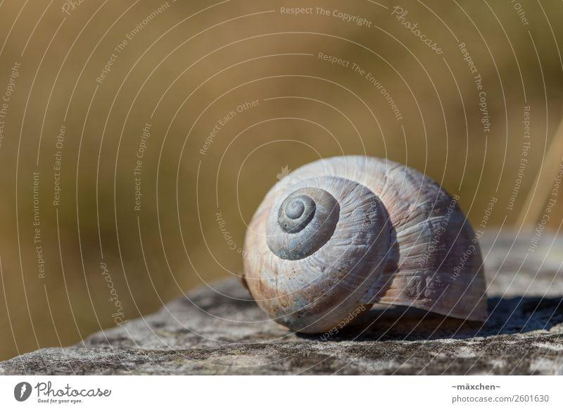 Schneckenhaus Natur liegen ruhig braun grau verkratzt Strukturen & Formen Unschärfe Makroaufnahme Grasland Stein steinig grün Schärfe leer Einsamkeit Unbewohnt