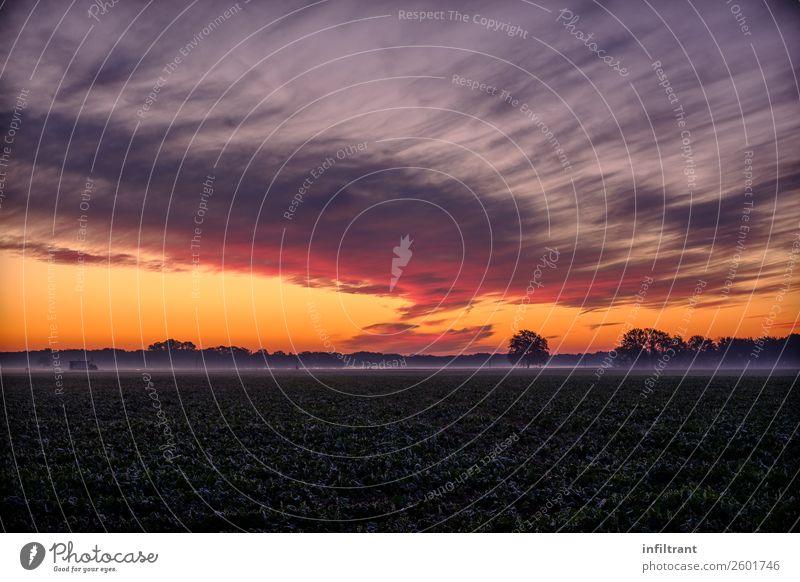 bunter Herbstmorgen Natur Landschaft Himmel Wolken Horizont Sonnenaufgang Sonnenuntergang Nebel Feld Wald ästhetisch natürlich gelb violett orange rot schwarz