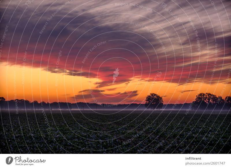 bunter Herbstmorgen Umwelt Natur Landschaft Himmel Wolken Horizont Sonnenaufgang Sonnenuntergang Nebel Baum Wiese Feld natürlich mehrfarbig gelb violett orange