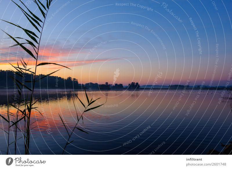 Morgens am See Umwelt Natur Landschaft Wasser Himmel Sonnenaufgang Sonnenuntergang Sonnenlicht Herbst Schönes Wetter ästhetisch nass natürlich blau gelb orange