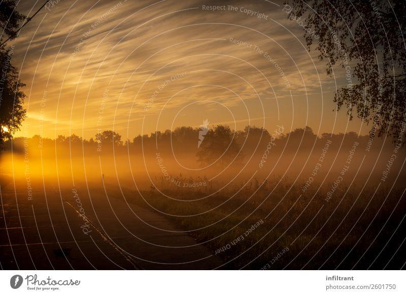 Morgennebel Himmel Natur Landschaft Sonne Wolken Einsamkeit ruhig Herbst gelb Umwelt natürlich Wiese orange braun Stimmung träumen
