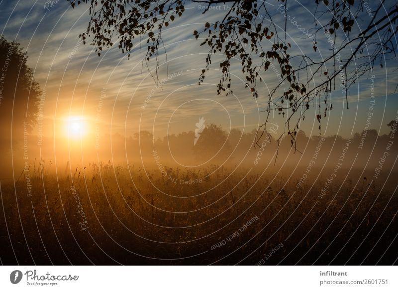 Morgennebel Umwelt Natur Landschaft Sonnenaufgang Sonnenuntergang Sonnenlicht Herbst Nebel Wiese Feld Wald ästhetisch natürlich braun gelb orange Stimmung