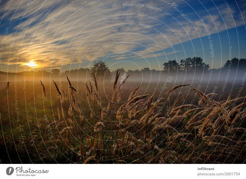 Gräser im Morgennebel Natur blau schön Landschaft Erholung Wolken Einsamkeit ruhig gelb Herbst Umwelt natürlich Wiese Gras orange braun