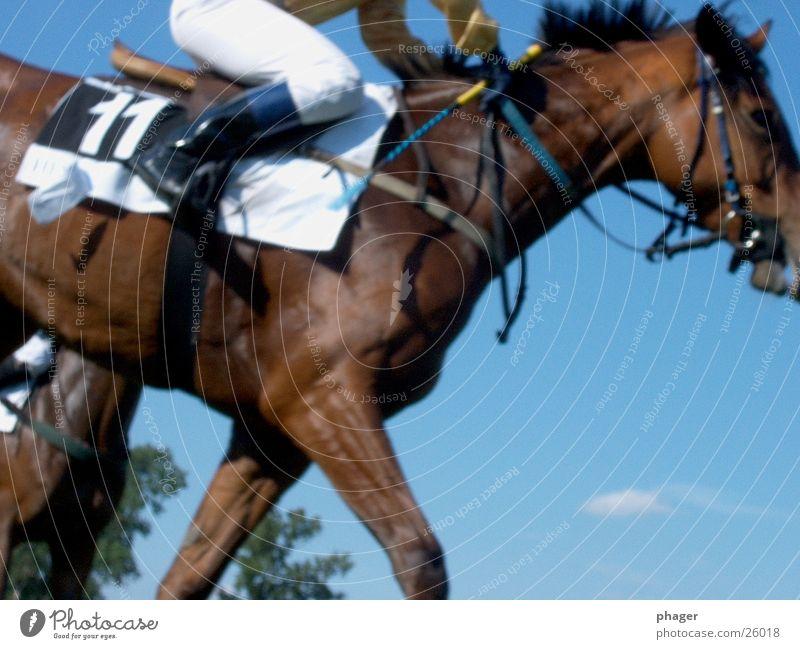 nun lauf doch! Sport laufen Erfolg Pferd heiß Rennsport Sportveranstaltung Sportler Hose verlieren Reitsport transpirieren Reiter 11 Pferdegangart Schweiß