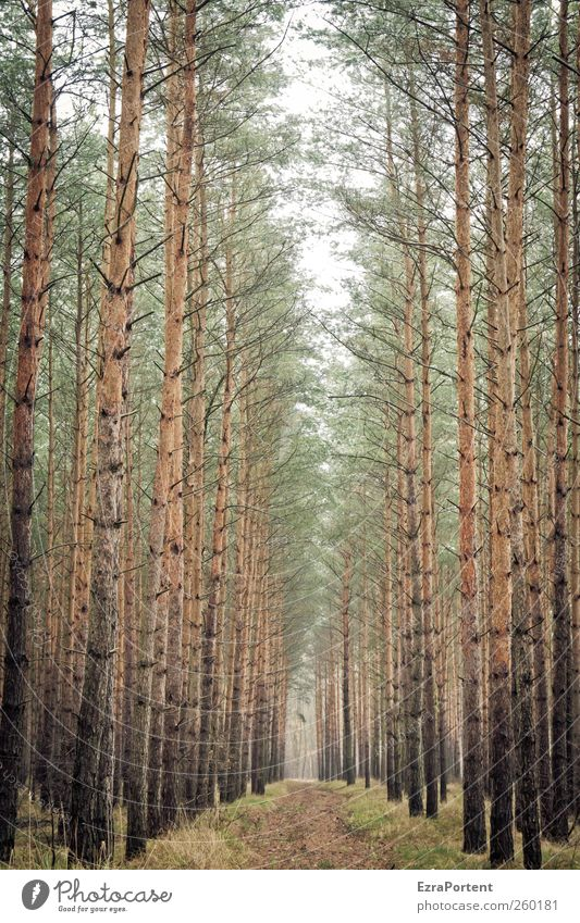 Wo geht`s hin ? Natur grün Pflanze Baum Tier Landschaft Winter Herbst Wege & Pfade Holz grau braun Erde Fußweg Baumstamm Baumkrone