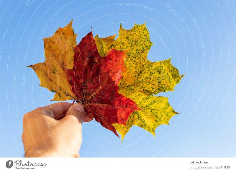 Herbstzeit Zufriedenheit Erholung Meditation Hand Finger Himmel Blatt wählen beobachten berühren festhalten mehrfarbig Freiheit Freizeit & Hobby Gelassenheit