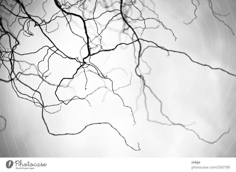 spooky winter Halloween Himmel Winter Wetter Nebel Baum Geäst Ast Zweige u. Äste Menschenleer Wachstum bedrohlich dunkel dünn gruselig kalt lang oben viele wild