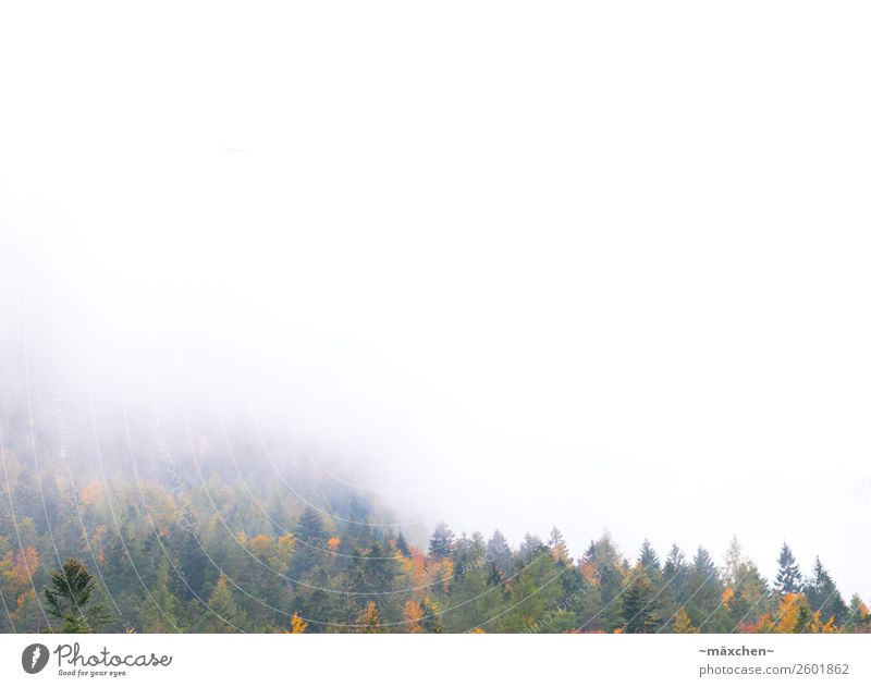 Nebel Natur Landschaft Wolken Herbst Baum Wald Felsen Alpen Berge u. Gebirge mehrfarbig gelb gold grün orange Laubwald Laubbaum Blatt Nadelwald Nadelbaum