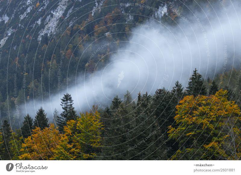 Nebel Natur Landschaft Tier Wolken Herbst Baum Wald Felsen Alpen Berge u. Gebirge gelb grau grün orange weiß Laubwald Laubbaum Blatt Nadelwald Nadelbaum