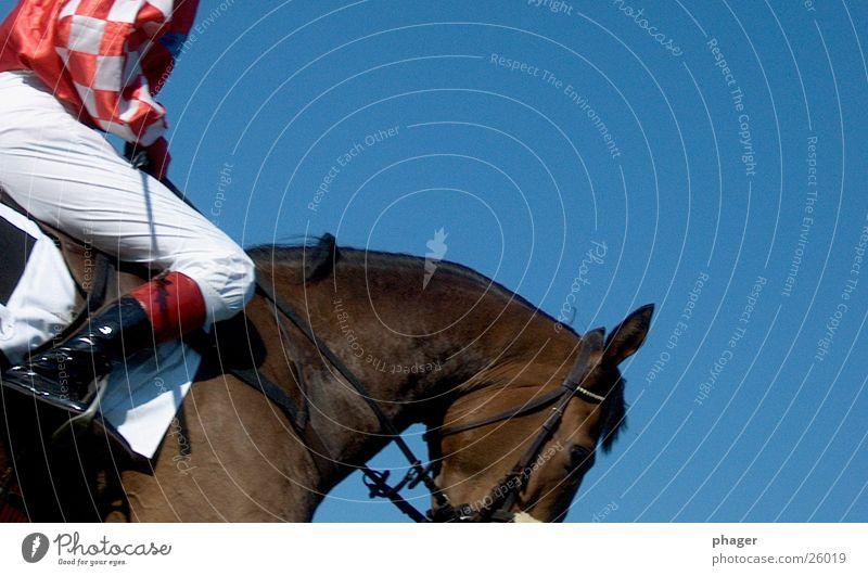 hott-e-hü! Sport laufen Erfolg Pferd heiß Rennsport Sportveranstaltung Sportler verlieren Reitsport transpirieren Reiter Pferdegangart Schweiß Verlierer Bewegung