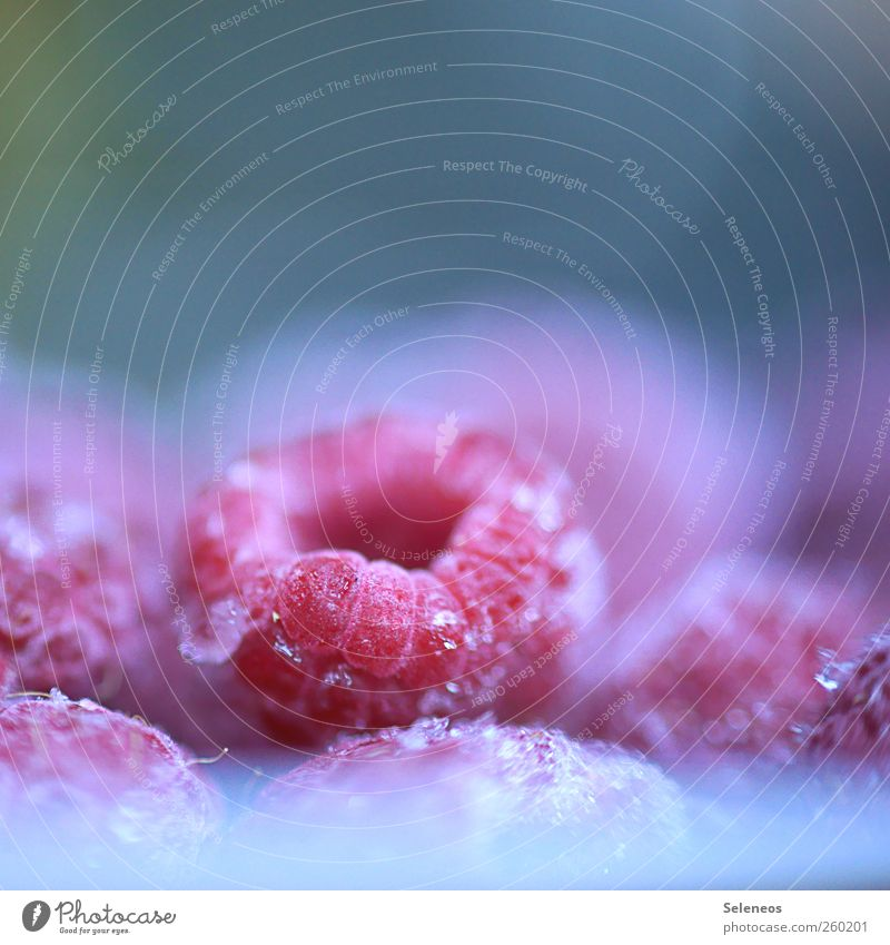 Fruchteis Lebensmittel Himbeeren Ernährung Vegetarische Ernährung Sommer Winter Eis Frost Pflanze kalt lecker nah fruchtig Farbfoto Nahaufnahme Makroaufnahme