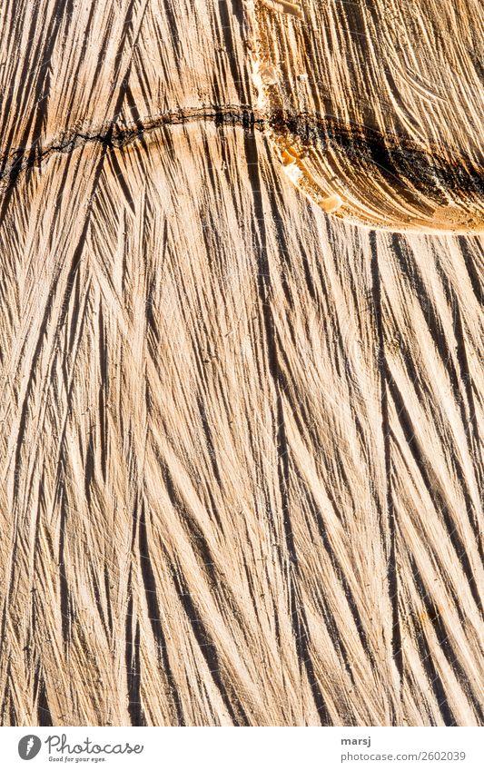 Sägeschnitt Baum Jahresringe Ahorn Holz einfach gesägt rau Oberflächenstruktur Riss Einschluss heimelig Hintergrundbild Farbfoto Gedeckte Farben Außenaufnahme