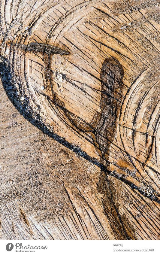 Hammer und Amboss? Natur Pflanze Baum Baumstamm Maserung Jahresringe Querschnitt Sägeschnitt gesägt Holz außergewöhnlich Duft frisch gigantisch einzigartig