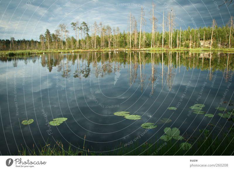 Bärensee* Umwelt Natur Landschaft Wasser Himmel Klima Wetter Schönes Wetter Wald Seeufer blau Finnland Skandinavien Wasseroberfläche Seerosenblatt Farbfoto