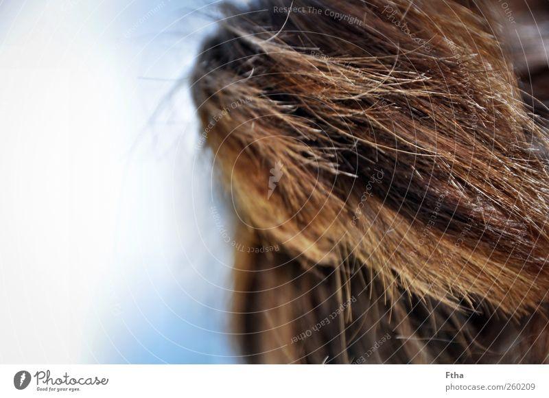 Sommermähne Haare & Frisuren brünett braun Wind Farbfoto Außenaufnahme Textfreiraum links Tag Licht Starke Tiefenschärfe Haarschopf Haarspitze Frauenhaare