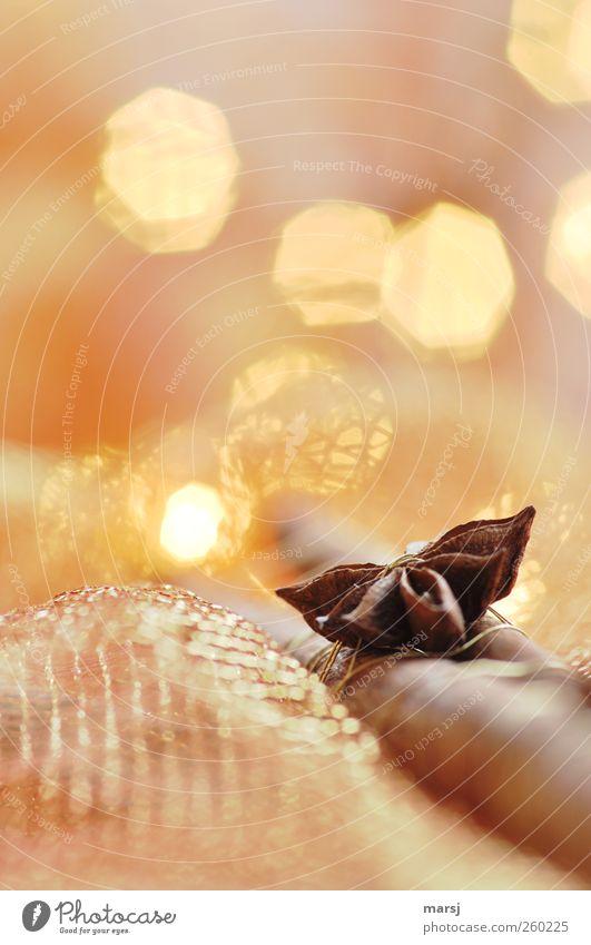 Anis und Zimt Weihnachten & Advent schön ruhig gelb Erholung Gefühle Stimmung braun gold elegant ästhetisch leuchten Dekoration & Verzierung weich Kitsch Kräuter & Gewürze