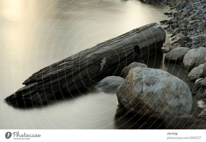 Baumstamm Umwelt Natur Landschaft Wasser Schönes Wetter Küste Flussufer Enns Stein Holz Treibholz braun gelb gold grau silber weiß Farbfoto Außenaufnahme