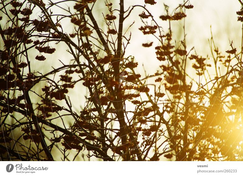 Abend. Tourismus Sonne Umwelt Natur Pflanze Sonnenaufgang Sonnenuntergang Sonnenlicht Winter Eis Frost Baum Wildpflanze Garten Holz braun gelb Freude Erholung